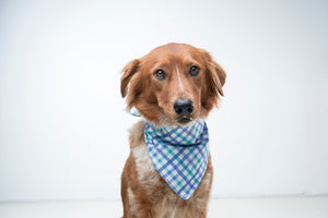 """Summertime"" Dog Bow Tie & Bandana Set - love dog republic"
