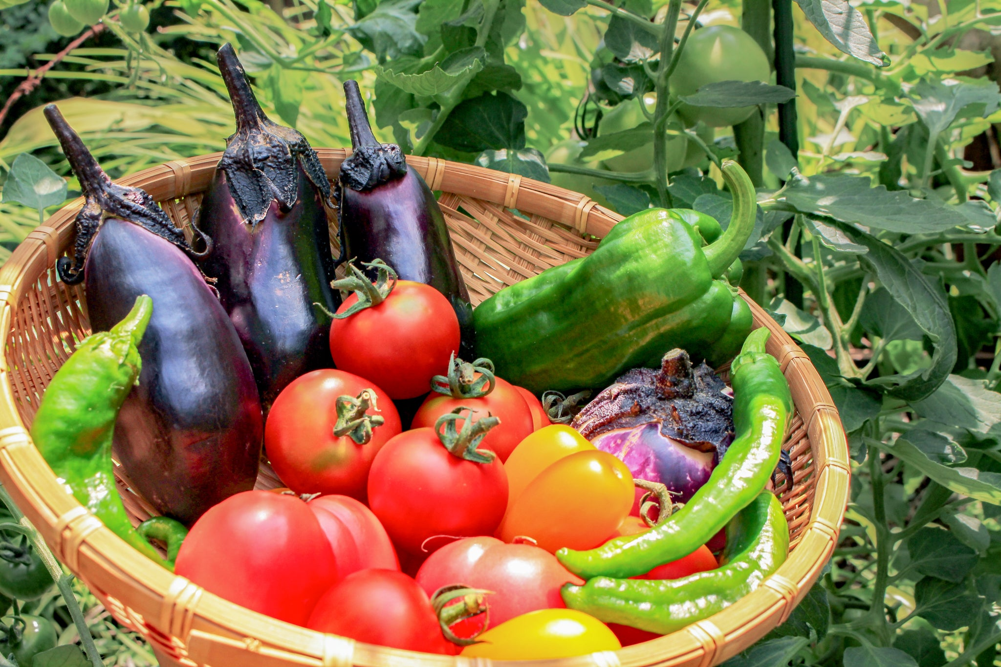 "Should You Avoid Nightshade Vegetables? Studies Say ""Not So Fast"""