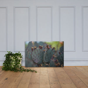Nopal Canvas