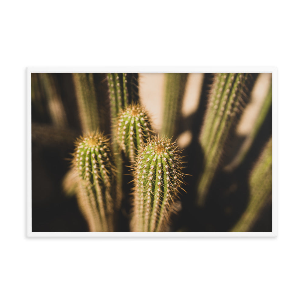 Cacti Bunch Framed Matte Poster