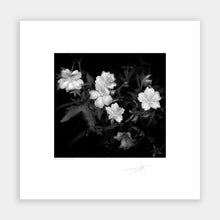 Load image into Gallery viewer, Irish Wild Flowers