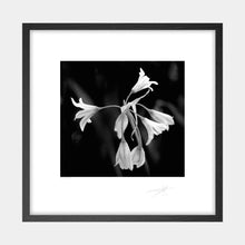Load image into Gallery viewer, Wild Garlic