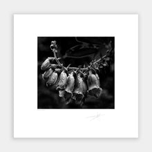 Load image into Gallery viewer, Fox Glove
