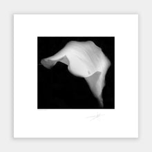 Load image into Gallery viewer, Easter Lily