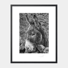 Load image into Gallery viewer, Donkey