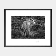 Load image into Gallery viewer, Connemara pony