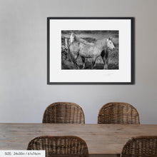 Load image into Gallery viewer, Connemara ponies