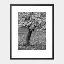 Load image into Gallery viewer, Twisted tree