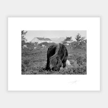 Load image into Gallery viewer, Connemara pony '97