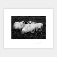 Load image into Gallery viewer, Kerry sheep '88