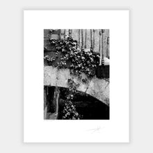 Load image into Gallery viewer, Hanging Ivy '88
