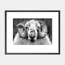 Load image into Gallery viewer, Dingle Sheep