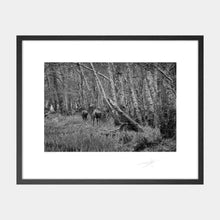 Load image into Gallery viewer, Killarney Deer