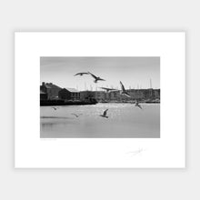 Load image into Gallery viewer, Kinsale gulls