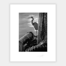 Load image into Gallery viewer, Kinsale heron
