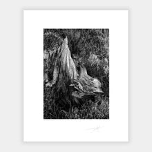 Load image into Gallery viewer, Bog Oak
