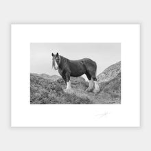 Load image into Gallery viewer, Horse