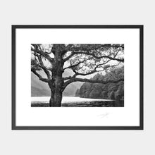 Load image into Gallery viewer, Wicklow trees