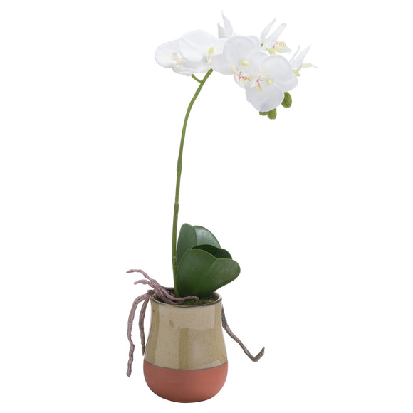 Orchid In Terracotta Glazed Pot