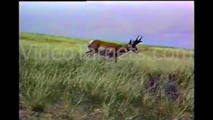 Pronghorn Shooting Set - *Requires Live Hunt Player