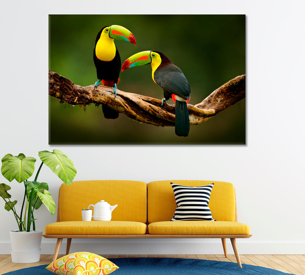 Toucans on Branch Costa Rica Forest