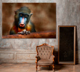 Mandrill Monkey in Nature Habitat Gabon Africa