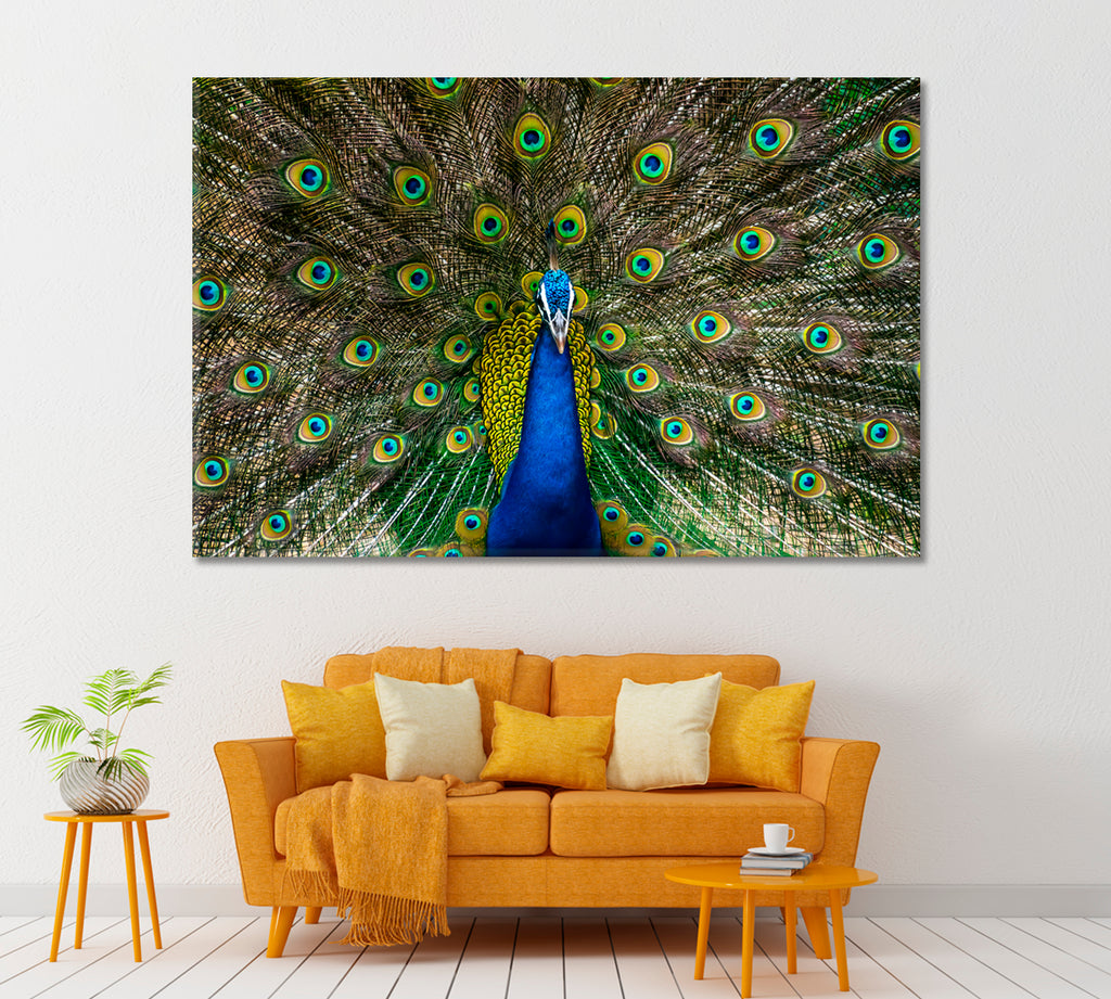 Peacock Showing Bright Feathers