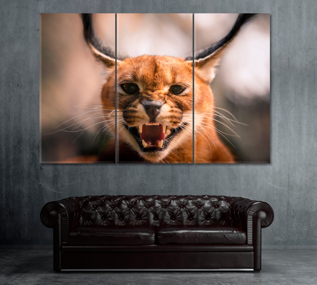 Wild Caracal in Desert