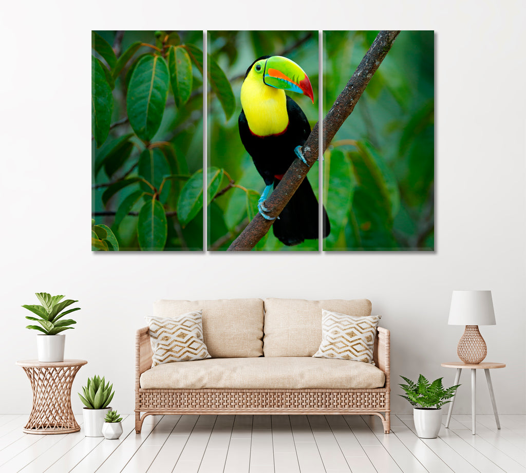 Keel-Billed Toucan Costa Rica
