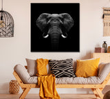 Elephant in Black and White