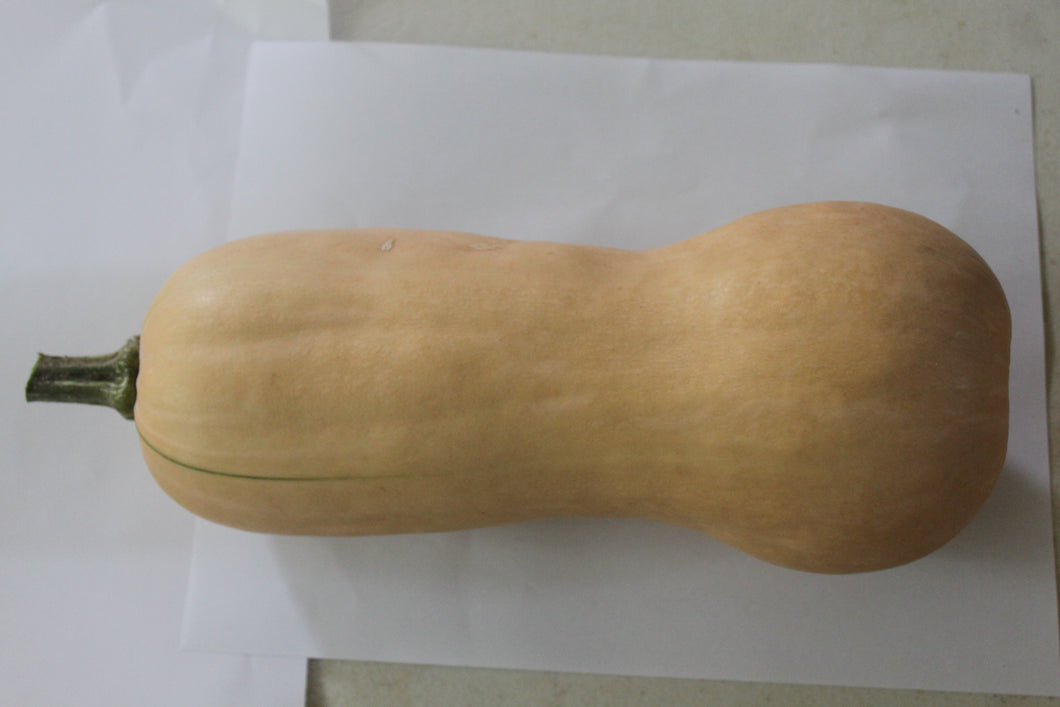 Butternut Squash (Sanders),  3 to 4 Lbs