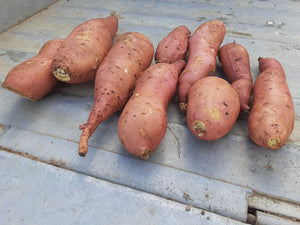 Hopeland Hybrid Sweet Potatoes 10 lb. bag