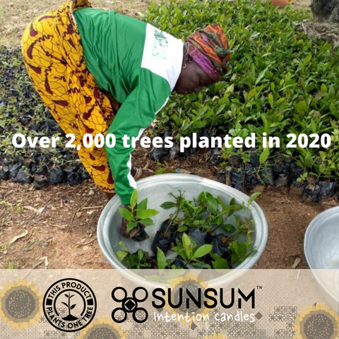 Sunsum Intention Candles Plants over 2,000 trees in 2020
