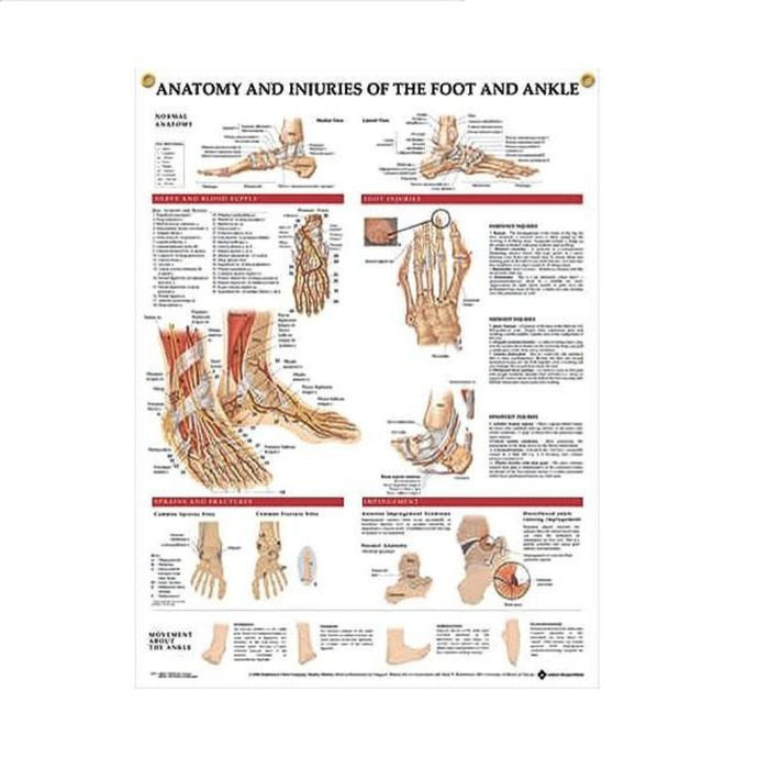 Anatomy of the Foot and Ankle Injuries