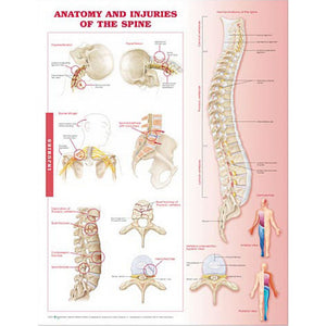 Anatomy and Injuries of the Spine A2 Poster