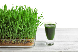Retention Enema (Wheat Grass)