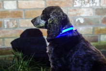 Load image into Gallery viewer, Light Up Dog Collar