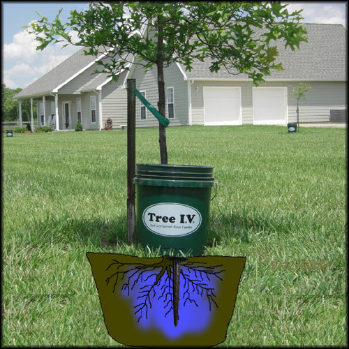 Draining a 5 gallon Tree I.V. deep root watering system that combines tree watering bags with a ross root feeder
