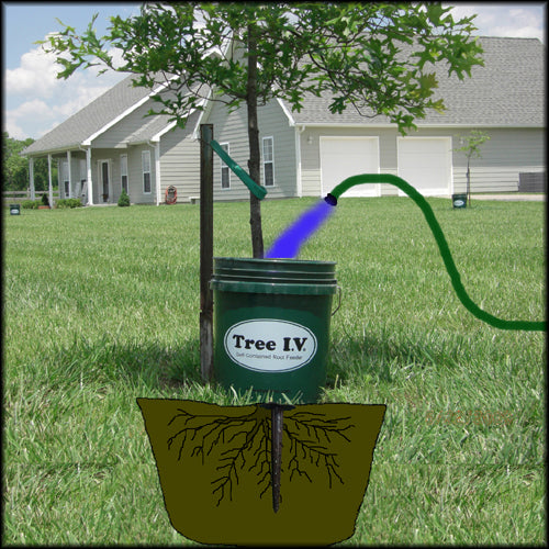 Filling a 5 gallon Tree I.V. deep root watering system that combines a tree gator with a ross root feeder