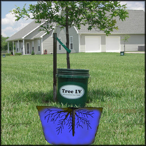 A new tree soaked with a week supply of water from a 5 gallon Tree I.V. deep root watering system that combines tree watering bags with a ross root feeder