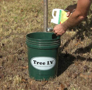 Tree I.V. Root Seeker DIY - Build Your Own Bucket