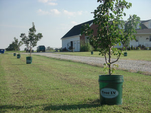 Tree I.V. Fill & Haul Root Seeker Watering System
