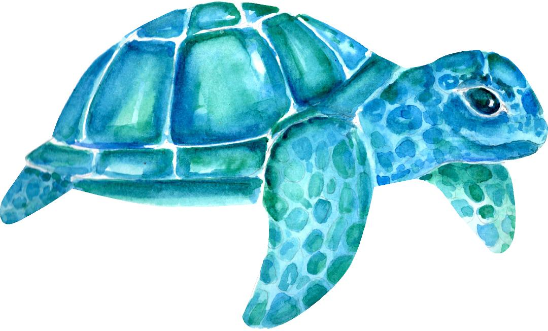 Baby Sea Turtle Wall Decal Watercolor Wall Sticker Ocean Sea Animal Wall Art Nursery Decor Removable Fabric Vinyl | DecalBaby