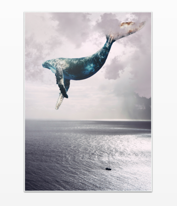 Flying Whale - Ready to Hang