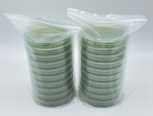 Load image into Gallery viewer, 20 High Nutrient Sorghum Agar Custom Petri Dishes