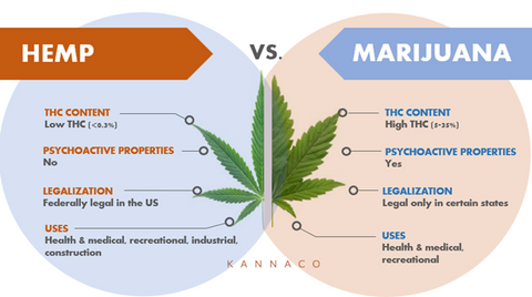 diagram showing the difference between hemp and marijuana