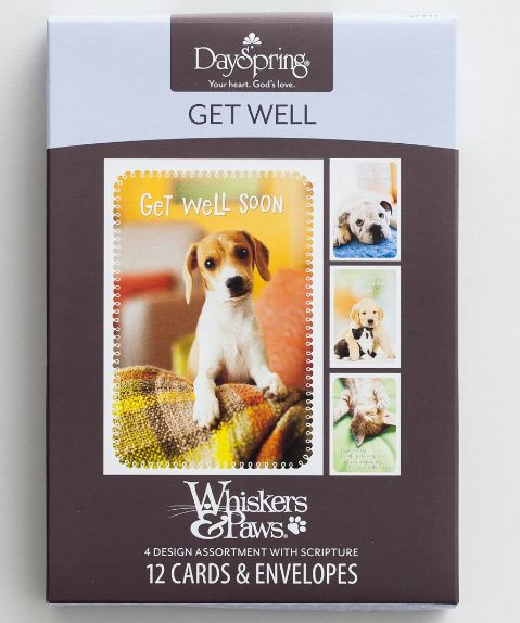 Dayspring Get Well Boxed Assortment Whiskers & Paws