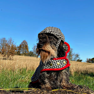 WIRE HAIRED DAXI WEARING HANDCRAFTED MONO LUXURY HARRIS TWEED DOG COAT AND DOG HAT BY LISH LONDON LUXURY PETWEAR