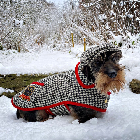WIRE HAIRED DAXI WEARING MONOCHROME HARRIS TWEED COAT BY LISH LUXURY SUSTAINABLE BRITISH PETWEAR BRAND