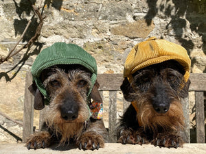 Mini Daxi in corduroy hats by LISH London luxury petwear